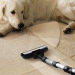 Jak sprzątać mieszkanie, w którym mieszka kot lub pies?