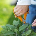 Pielęgnacja domowego zielnika – uniwersalne nożyczki ogrodowe Fiskars